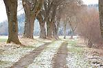 Europa, DEU, Deutschland, Bayern, Oberbayern, Landkreis Fuerstenfeldbruck, Weg, Baumallee, Winter, Schnee, Natur, Umwelt, Landschaft, Jahreszeiten, Stimmungen, Landschaftsfotografie, Landschaften, Landschaftsphoto, Landschaftsphotographie, Wetter, Wetterelemente, Wetterlage, Wetterkunde, Witterung, Witterungsbedingungen, Wettererscheinungen, Meteorologie, Wettervorhersage, <br /> <br /> [Fuer die Nutzung gelten die jeweils gueltigen Allgemeinen Liefer-und Geschaeftsbedingungen. Nutzung nur gegen Verwendungsmeldung und Nachweis. Download der AGB unter http://www.image-box.com oder werden auf Anfrage zugesendet. Freigabe ist vorher erforderlich. Jede Nutzung des Fotos ist honorarpflichtig gemaess derzeit gueltiger MFM Liste - Kontakt, Uwe Schmid-Fotografie, Duisburg, Tel. (+49).2065.677997, ..archiv@image-box.com, www.image-box.com]