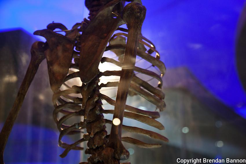 A human skeleton displayed at the Nairobi National Musuem