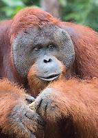 Borneo Male Elder Portrait
