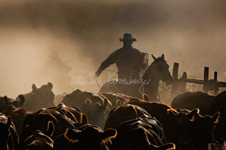 Single cowboy driving cattle through early morning dust with lariat; looks like Marlboro Man<br /> AHP Award-winner:  3rd Place 2015 Best Freelance Editorial Photograph - Western Horseman