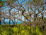Marshy area, St. Joseph Peninsula State Park, Cape San Blas, FL. Gulf of Mexico