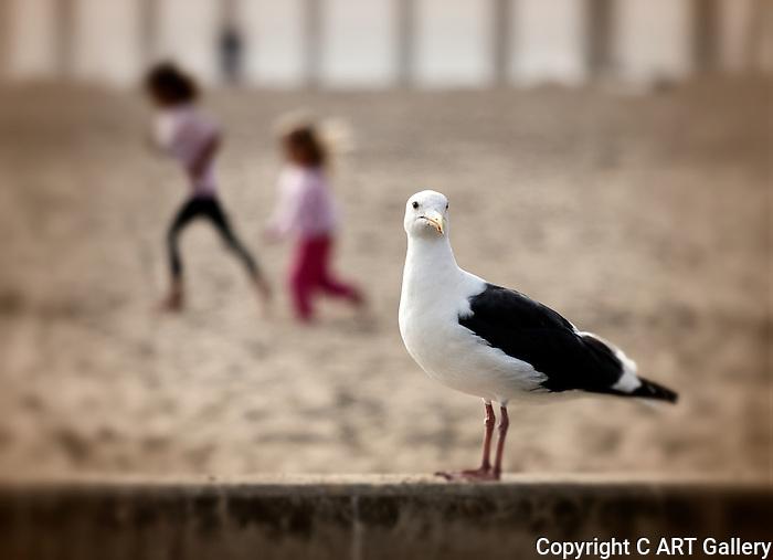 Seagull with Children, Huntington Beach, CA.