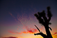 Cactus in the Sky