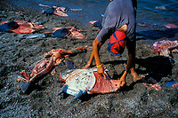 Shark fishing camp, Sea of Cortez, Mexico, Pacific Ocean