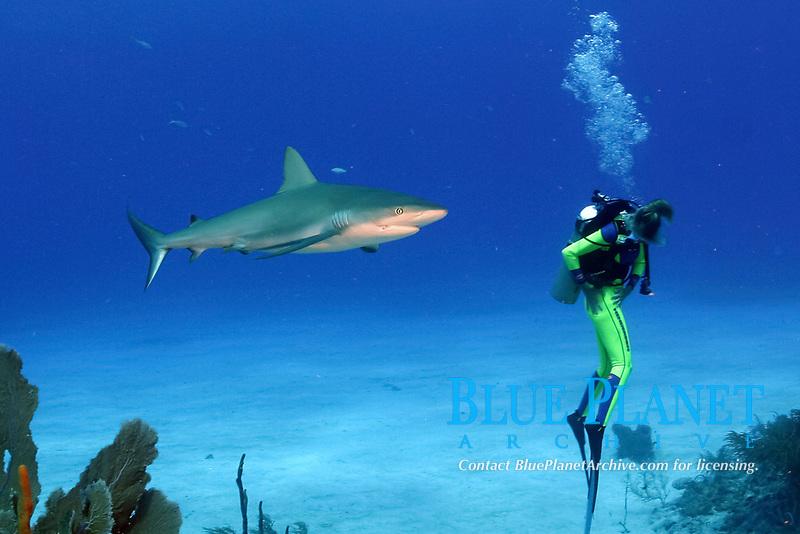 Caribbean reef shark, Carcharhinus perezii, approaches diver with back turned, unaware of the shark, Bahamas, Caribbean Sea, Atlantic Ocean