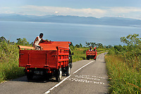 Trucks heading into Masohi city from the highlands. /Felix Features