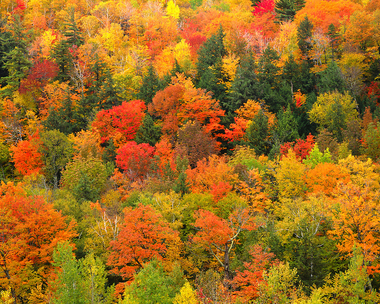 Hillside in fall color; Giant Mountain Wilderness; Adirondack and Preserve, NY