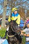 07 November 2009: Country Cousin and Carl Rafter after winning the Constitution Hurdle at Montpelier Hunt Races in Orange, Va. Country Cousin is owned by Oakwood Stable and trained by Julie Gomena.