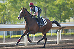 SHA TIN,HONG KONG-DECEMBER 08 : Lancaster Bomber,trained by Aidan O'Brien,exercises in preparation for the Hong Kong Mile at Sha Tin Racecourse on December 8,2017 in Sha Tin,New Territories,Hong Kong (Photo by Kaz Ishida/Eclipse Sportswire/Getty Images)