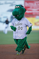 Kannapolis Intimidators mascot Tim E. Gator runs the bases between innings of the game against the Hickory Crawdads at Kannapolis Intimidators Stadium on April 8, 2016 in Kannapolis, North Carolina.  The Crawdads defeated the Intimidators 8-2.  (Brian Westerholt/Four Seam Images)