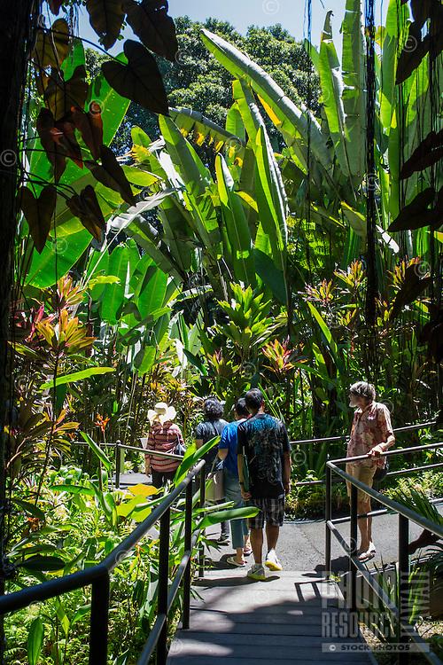 Tourists on the boardwalk near large heliconia plants at the Hawaii Tropical Botanical Garden, Papa'ikou, Big Island of Hawai'i.