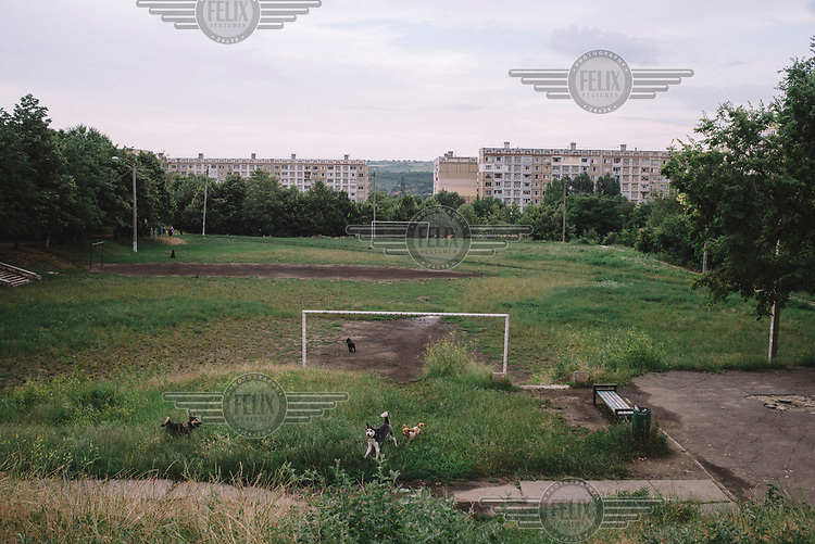 Dogs playing beside a football pitch in the Ciocana district.