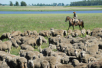URUGUAY Estancia La Magdalena bei Salto, 18.ooo Hektar Weideland fuer 12.000 Rinder und 18.000 Schafe und 5.000 Hektar Ackerland fuer Reis, Gensoja und Zuckerhirse, Gauchos auf Pferd treiben eine Schafherde  / <br /> URUGUAY Estancia La Magdalena near Salto, 18.000 hectares farm, herd of Merino sheps and shepherd on horse