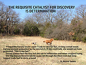 Determination Discovery