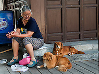 Frau mit Hunden, Peking, China, Asien<br /> Woman with dogs, Beijing, China, Asia