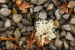Lichen Resting on a Pile of Rocks