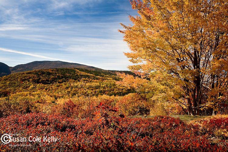 Autumn color on Cadillac Mountain in Acadia National Park, ME, USA