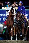 Will Take Charge, ridden by Luis Saez in the Breeders' Cup Classic on November 2, 2013 at Santa Anita Park in Arcadia, California during the 30th running of the Breeders' Cup.(Alex Evers/ Eclipse Sportswire)