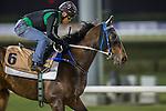 MEYDAN,DUBAI-MARCH 24:Domineer ,trained by Caspar Fownes,exercises in preparation for the Dubai Golden Shaheen at Meydan Racecourse on March 24,2016 in Meydan,Dubai (Photo by Kaz Ishida)