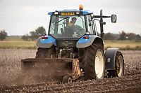 7-10-2021 Topping  potatoes in the Lincolnshire Fens <br /> ©Tim Scrivener Photographer 07850 303986<br />      ....Covering Agriculture In The UK....
