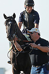 May 17, 2013, morning activities at Pimlico on Friday before the Preakness. Preakness contender Mylute leaves the track after his Friday morning gallop at Pimlico Race Course in Baltimore, Md.(Joan Fairman Kanes/Eclipse Sportswire)