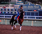 October 30, 2019: Breeders' Cup Classic entrant War of Will, trained by Mark E. Casse, exercises in preparation for the Breeders' Cup World Championships at Santa Anita Park in Arcadia, California on October 30, 2019. Scott Serio/Eclipse Sportswire/Breeders' Cup/CSM