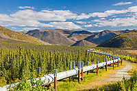 Trans Alaska oil pipeline traverses the autumn tundra north of the Arctic Circle, Alaska.