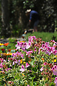 TRESCO ABBEY GARDENS, ISLES OF SCILLY. 20/06/2015.  PHOTOGRAPHER CLARE KENDALL.