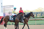 April 12, 2014: #5 Thundergram with jockey Norberto Arroyo, Jr. aboard before the start of the Arkansas Derby (Grade I) at Oaklawn Park in Hot Springs, AR. Zoie Clift/ESW/CSM