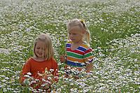 Mädchen, Kinder pflücken Blumenstrauß in Kamillenfeld, Blumenpflücken, Geruchslose Kamille, Tripleurospermum perforatum, Tripleurospermum inodorum, Matricaria inodora, Scentless False Chamomile