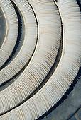Xingu Indigenous Park, Mato Grosso State, Brazil. Aldeia Barranco Queimado. Rare  Caramujo snail shell necklaces.