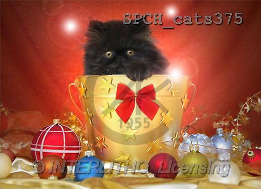 Xavier, CHRISTMAS ANIMALS, photos(SPCHcats375,#XA#)