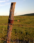 Old cedar fence posts like this, installed in the early 1900's, became a source of amusement for local farmers and ranchers with little better to do than use them as an occasional plinking target for their rifle. In the vast, lonely expanse of the high desert prairie, any form of amusement was welcomed.