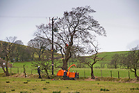 Electricity North West workers powerline tree cutting, removing branches from trees to clear electricity power lines, Whitewell, Lancashire.