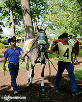 Win Willy winning The Joe French Memorial Stakes at Delaware Park on 6/1/13 making Win Willy a millionaire