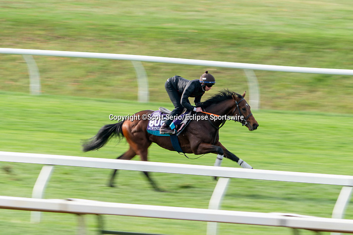 November 5, 2020: Devilwala, trained by trainer Ralph M. Beckett, exercises in preparation for the Breeders' Cup Juvenile Turf at Keeneland Racetrack in Lexington, Kentucky on November 5, 2020. Scott Serio/Eclipse Sportswire/Breeders Cup/CSM