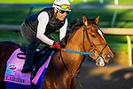 April 27, 2021: Clairiere, trained by trainer Steve Asmussen, exercises in preparation for the Kentucky Oaks at Churchill Downs on April 27, 2021 in Louisville, Kentucky. John Voorhees/Eclipse Sportswire/CSM