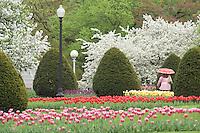 Public Garden spring, flowers misty rain, Boston, MA tulips