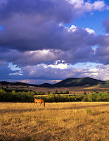 Horse in pasture with storm clouds. Near Alpine, Oregon.
