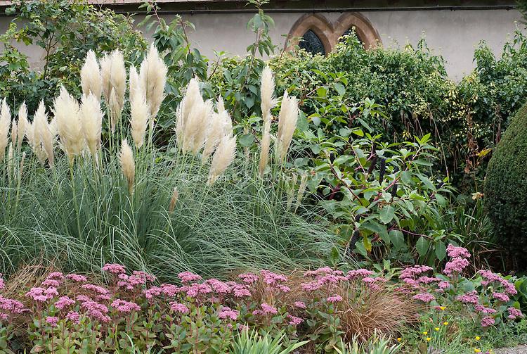 Cortaderia selloana + Sedum 'Joyce Henderson' in landscape border with Phytolacca americana (pokeweed) against wall