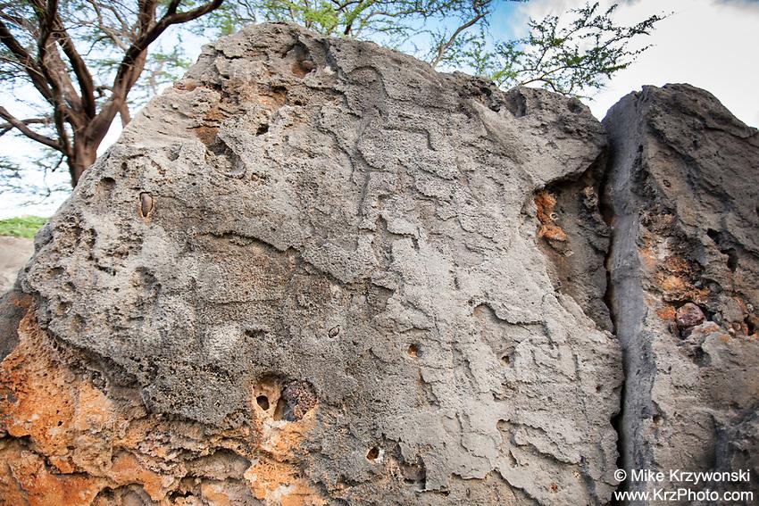 Kumuaku'opio Petroglyphs, Makua Valley, Oahu