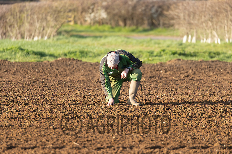 25-3--2021 Farmer checking a field for seed <br /> ©Tim Scrivener Photographer 07850 303986<br />      ....Covering Agriculture In The UK....