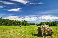 Large round hay bales dot a farm field in the agricultural community of Palmer, Alaska