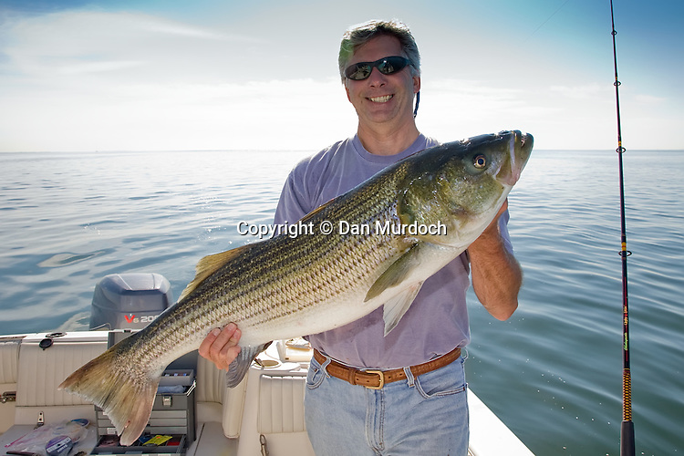 Fisherman showing off a striped bass
