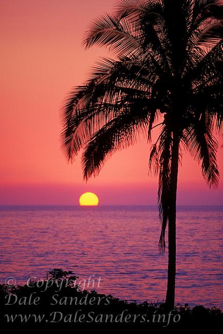 Sunset and silhouetted palm tree, Maui, Hawaii, USA.
