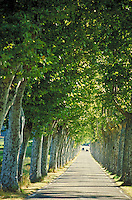 Trees lining two-lane highway make lunimous arch. Cars in distance. Uzes Provence France.