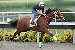 01 August 2009: Cragmont (2yo c by Yes Its True) works at Del Mar Race Track, Del Mar, CA