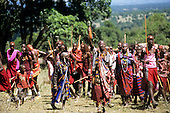 Lolgorian, Kenya. Siria Maasai Manyatta; group of visiting family arriving with gifts for the celebrations.