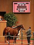 Hip #469 Bernardini - Wilshewed colt sold for $1,550,000.   Consigned by Valkyre Stud.  September 12, 2012.