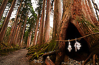 In the avenue of ancient cryptomeria trees leads to the Inner Shrine at Togakushi, sacred paper garlands hang at the opening of a hollow tree, Nagano, Japan.<br /> <br /> (title translation Ryuichi Abe & Peter Haskel)
